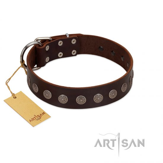 """Starry-Eyed"" Best Quality FDT Artisan Brown Designer Leather Great Dane Collar with Small Plates"