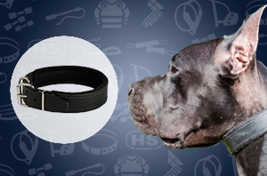 Leather collar for Great Dane
