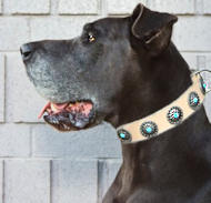 Great Dane Leather Dog Collar &Silver Plated Circles Blue Stones