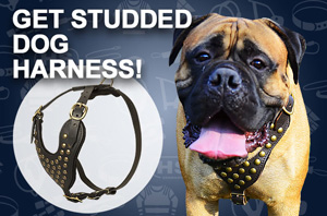 Leather Great Dane Harness