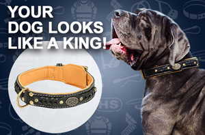Leather Great Dane Collar