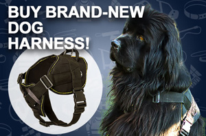Nylon Harness for Great Dane
