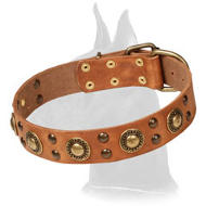 'Golden Knight' Genuine Leather Collar for Great Dane