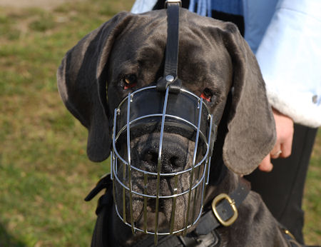Large Dog Muzzle for Great Dane muzzle