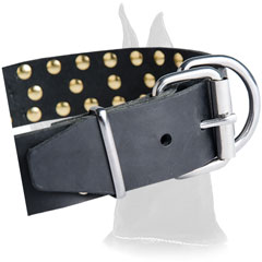 Nickel Plated Buckle on Leather Great Dane Collar