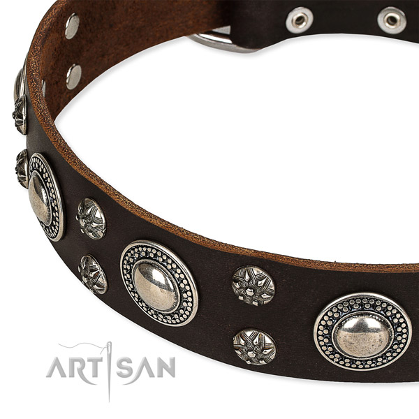 Quick to fasten leather dog collar with almost unbreakable chrome  plated buckle and D-ring