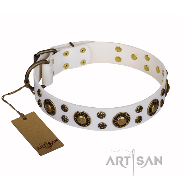 Everyday use full grain natural leather collar with studs for your canine