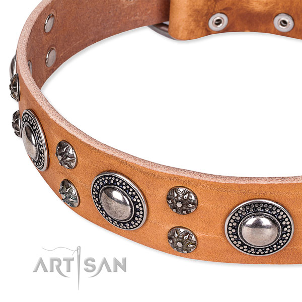 Stylish walking full grain natural leather collar with rust resistant buckle and D-ring