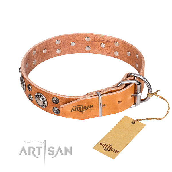 Everyday use leather collar with studs for your doggie