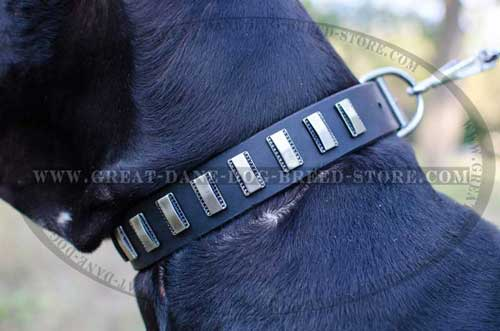 Great Dane Leather Collar for everyday usage