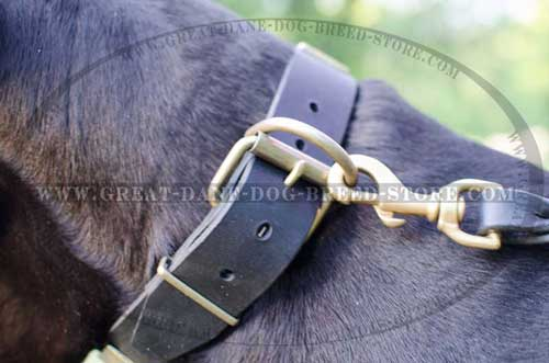 Great Dane Leather Collar for different usage