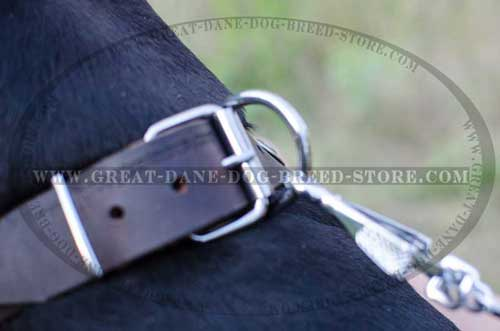 Great Dane Leather Collar for walking