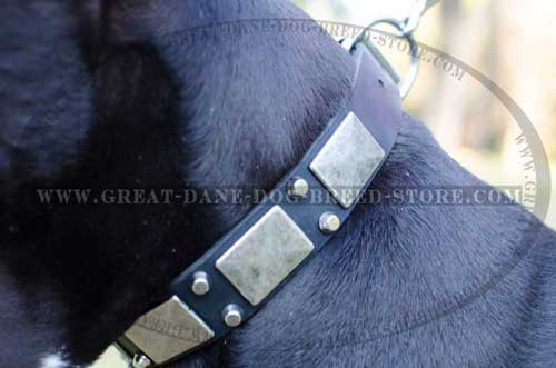 High-quality Great Dane Leather Collar