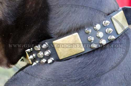 Amazing Great Dane Leather Dog Collar