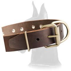 Great Dane Leather Collar with brass decoration