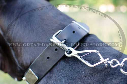 Great Dane Leather Collar with strong hardware
