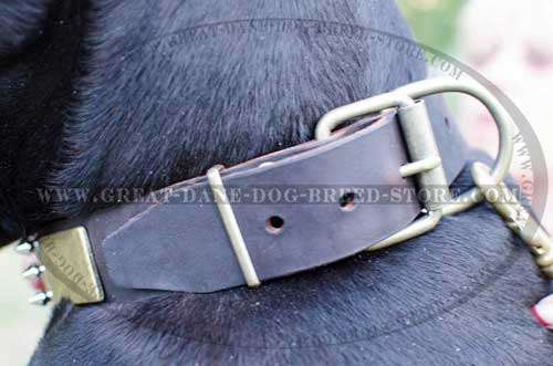 Amazing Great Dane Leather Canine Collar