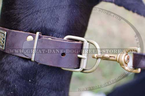 Strong Great Dane Leather Collar