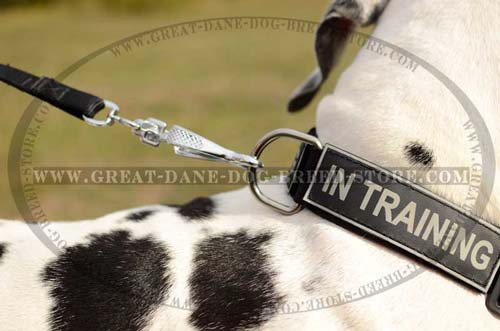 Great Dane Nylon Dog Collar with D-ring