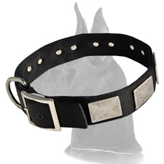 Great Dane Collar with D-ring