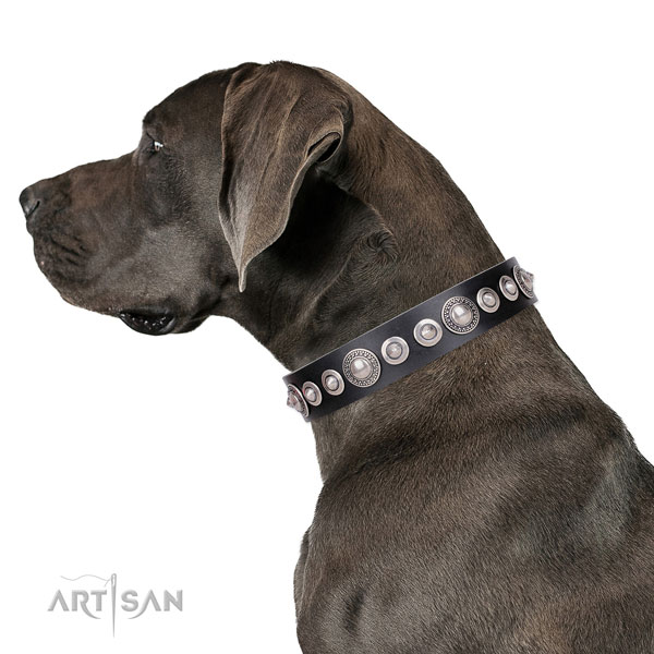 Stylish design studded leather dog collar for basic training