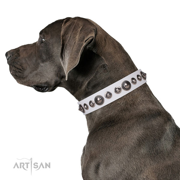 Incredible decorated natural leather dog collar for basic training