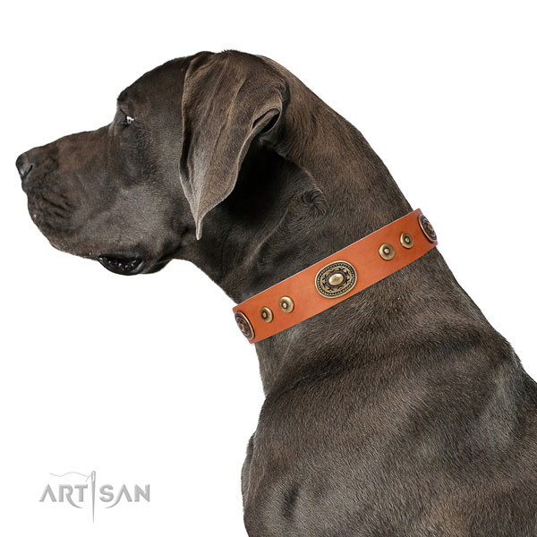 Amazing adorned leather dog collar for stylish walking