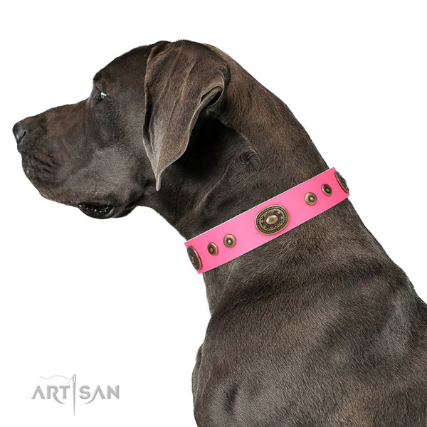 Top notch decorated leather dog collar for daily walking