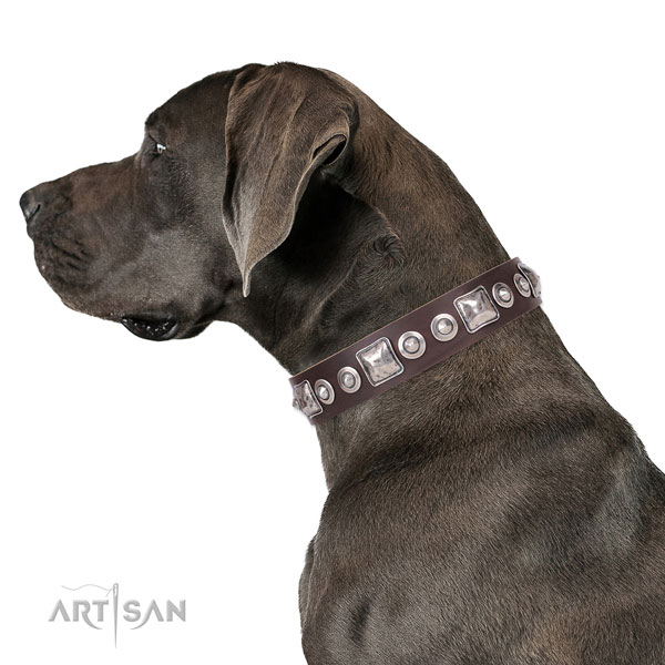 Unusual studded genuine leather dog collar for basic training