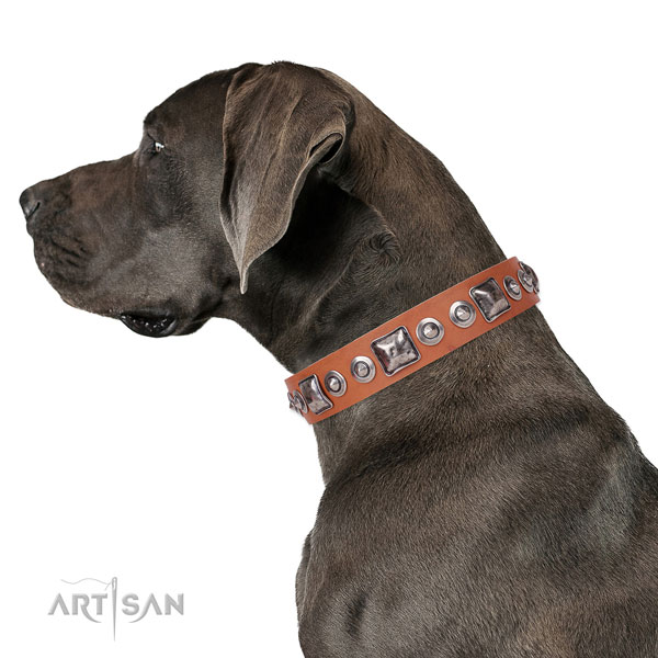 Stunning decorated natural leather dog collar for daily walking