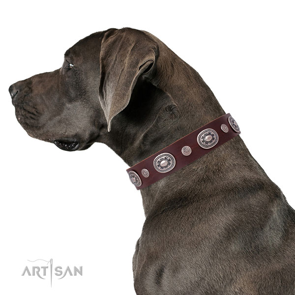Reliable buckle and D-ring on genuine leather dog collar for walking in style