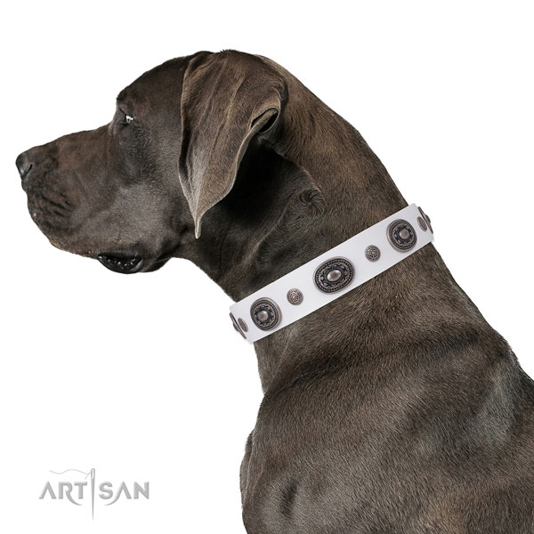 Leather dog collar with reliable buckle and D-ring for everyday walking