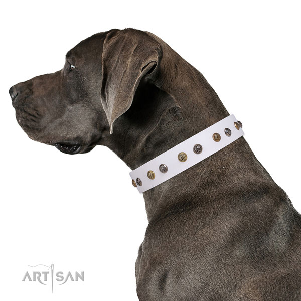 Comfortable wearing embellished dog collar made of top rate natural leather