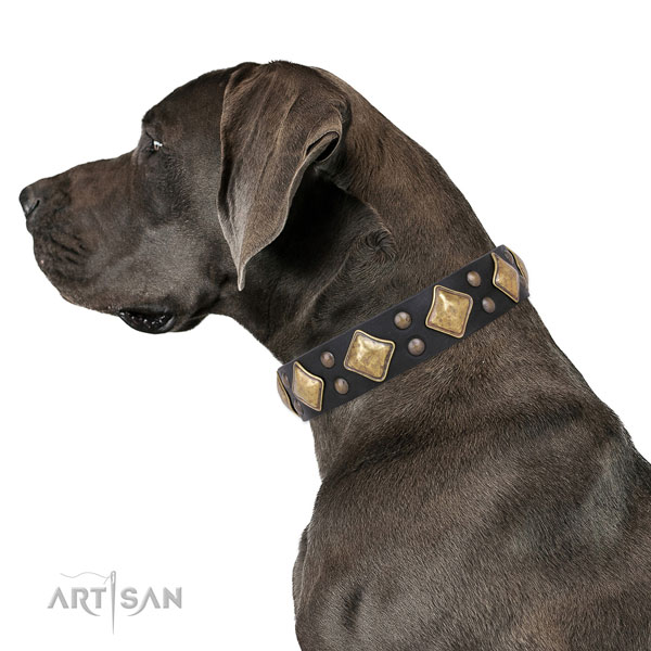 Everyday walking decorated dog collar made of reliable genuine leather