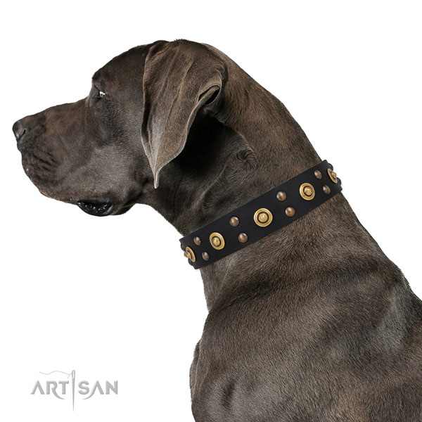 Stylish walking dog collar with extraordinary adornments