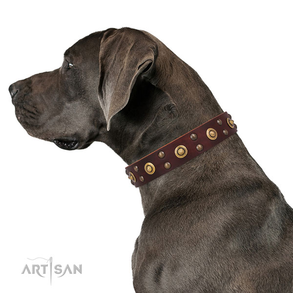 Stylish walking dog collar with top notch adornments