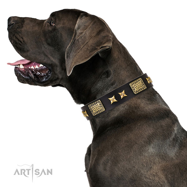 Daily walking dog collar with incredible studs