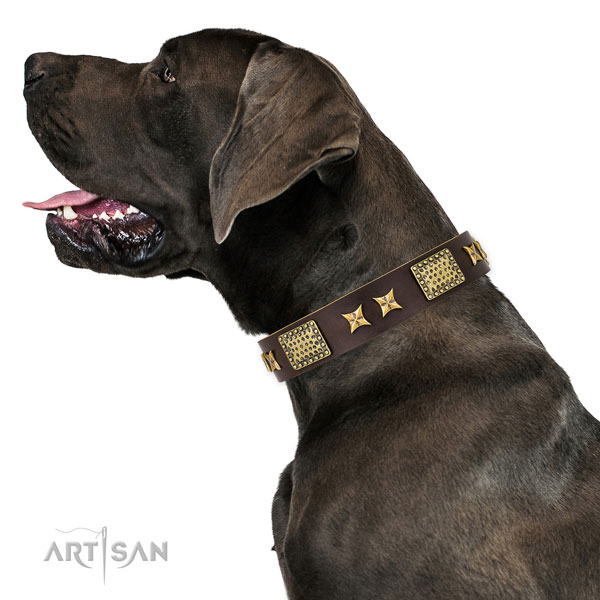 Stylish walking dog collar with inimitable decorations