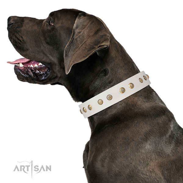 Fashionable adornments on everyday use natural genuine leather dog collar