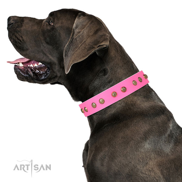 Impressive decorations on walking natural genuine leather dog collar
