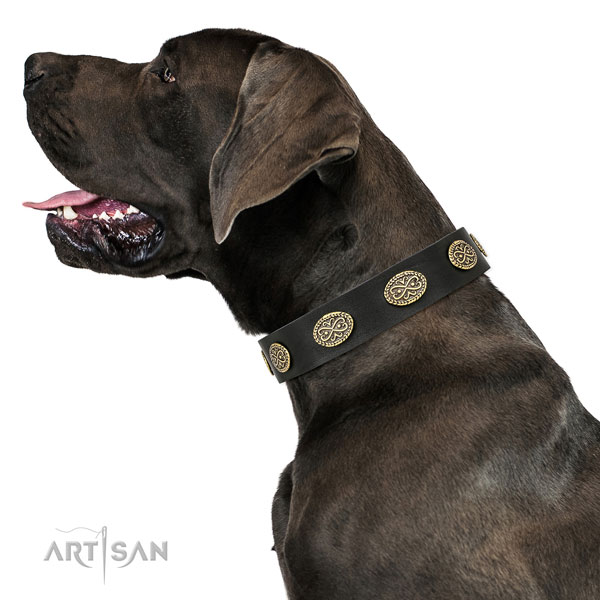 Designer studs on comfortable wearing leather dog collar