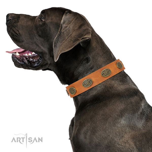 Inimitable embellishments on easy wearing full grain leather dog collar