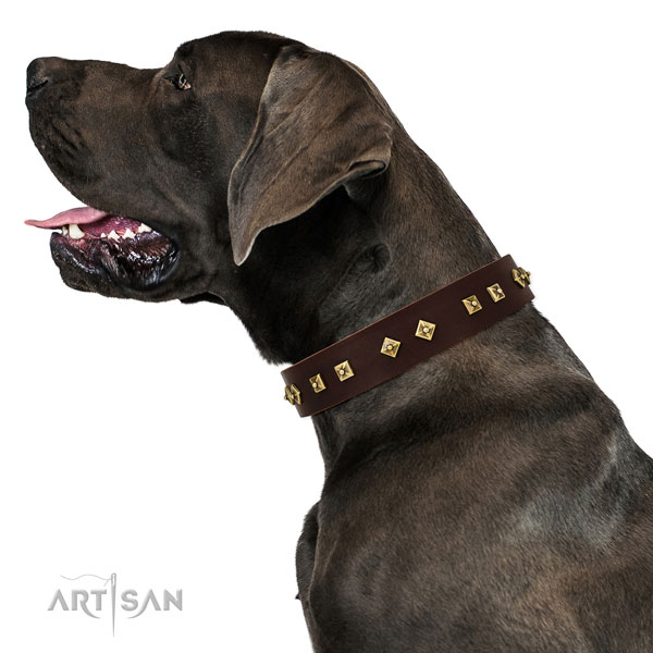 Fashionable studs on daily use full grain natural leather dog collar