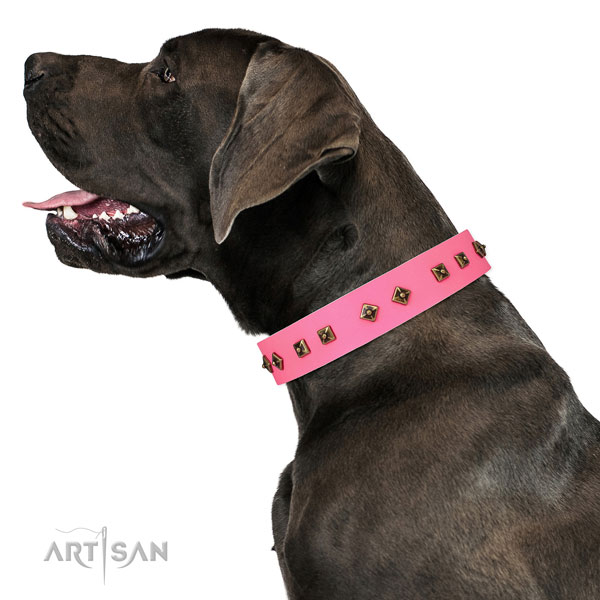 Unique decorations on daily use dog collar