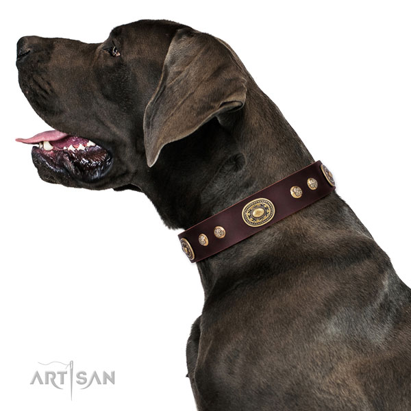 Amazing adornments on easy wearing dog collar