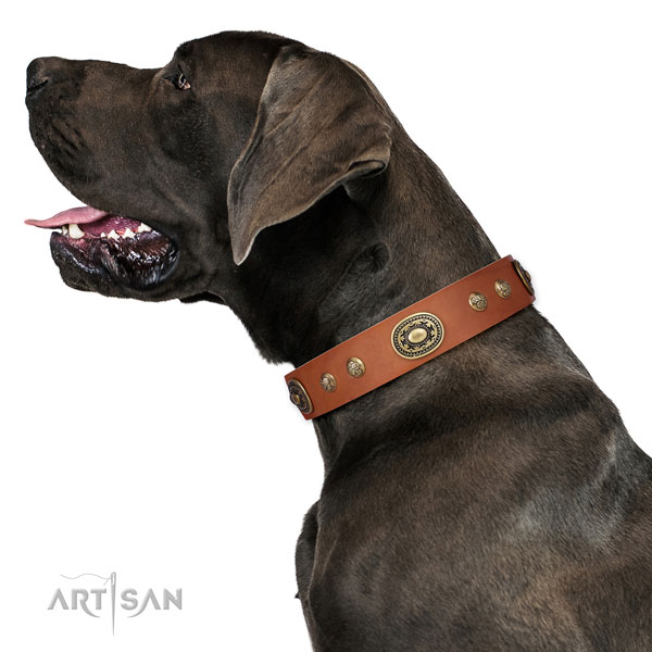 Awesome studs on fancy walking dog collar
