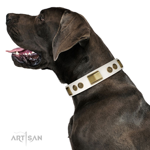 Top notch stylish walking dog collar of natural leather