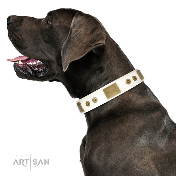 Durable everyday walking dog collar of natural leather