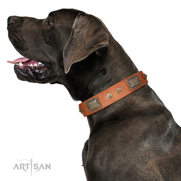 Daily use dog collar of genuine leather with stunning adornments