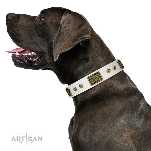 Daily use dog collar of leather with significant adornments